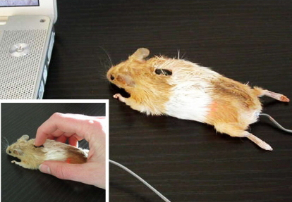 images/stories/Computer-Creative-Gadget/MouseRealy.jpg